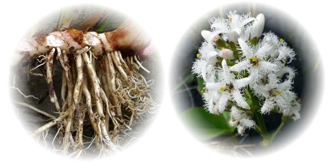 Сборы полезных трав для лечения заболеваний желудка и кишечника