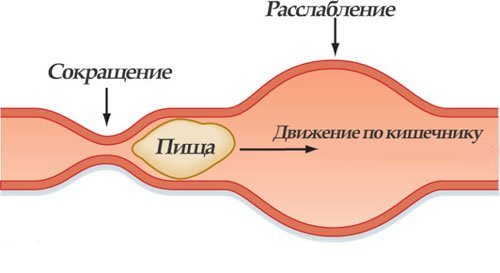 Что такое перистальтика кишечника - симптомы нарушения, лечение
