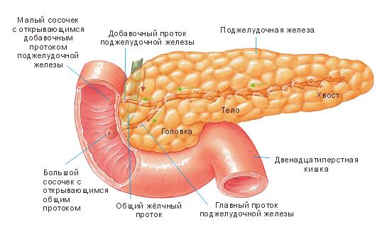Поджелудочная железа — причины заболевания, симптомы и признаки, способы лечения, диагностика