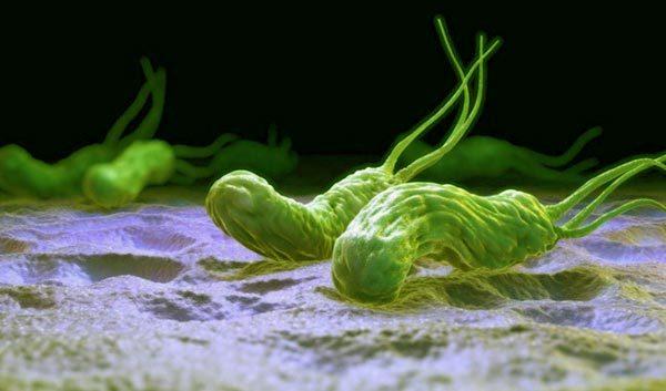 Как лечить хеликобактер пилори народными средствами - лечение бактерии травами