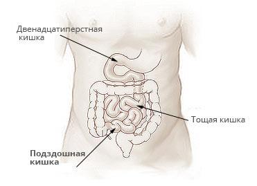 Подвздошная кишка: где находится, функции и возможные заболевания