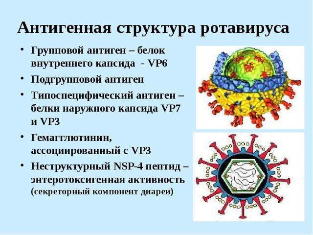 Ротавирус при беременности: кишечная ротавирусная инфекция у беременных, чем лечить, что делать во 2 и 3 триместре, симптомы, опасно ли для ребенка, последствия